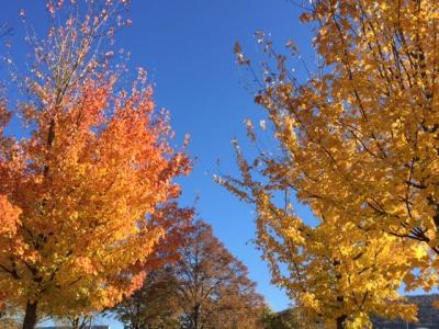 2016-10-20_arbres La Fayette.JPG