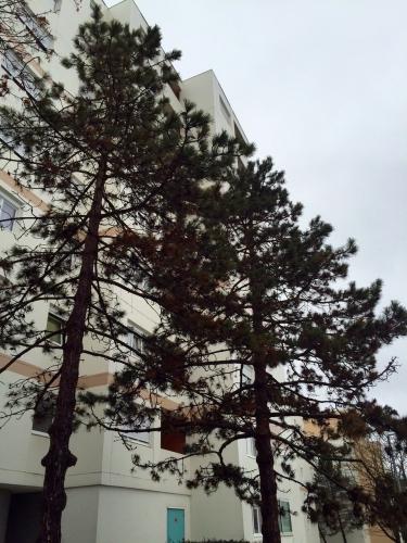 2016-01-31_pins Planoise.jpg